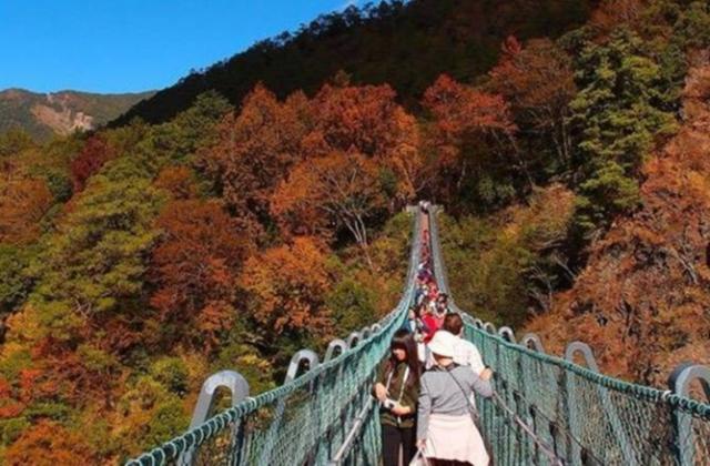 奧萬大(奧萬大國家森林遊樂區、森林浴行程)