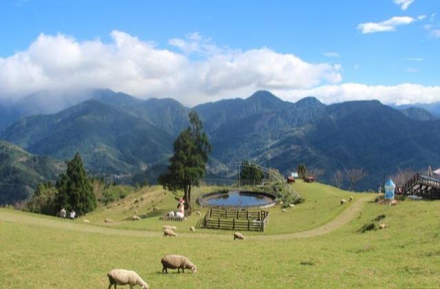 清境農場(青青草原-綿羊秀、天空步道)